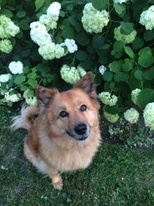 Flowers make Missy smile.