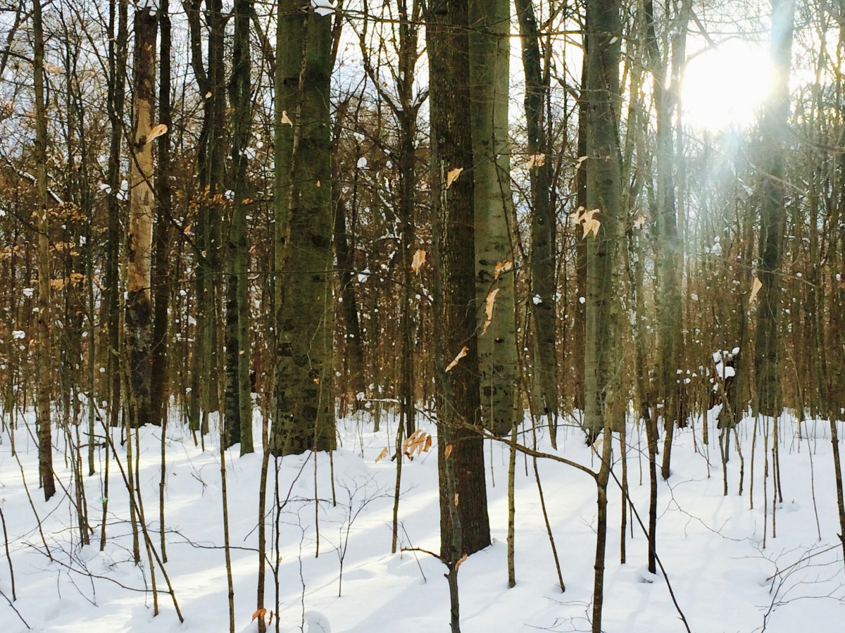 Winter Forest Bath
