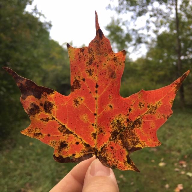 Early Autumn ForestBath